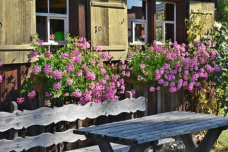 pink flowering plants near gray picnic table
