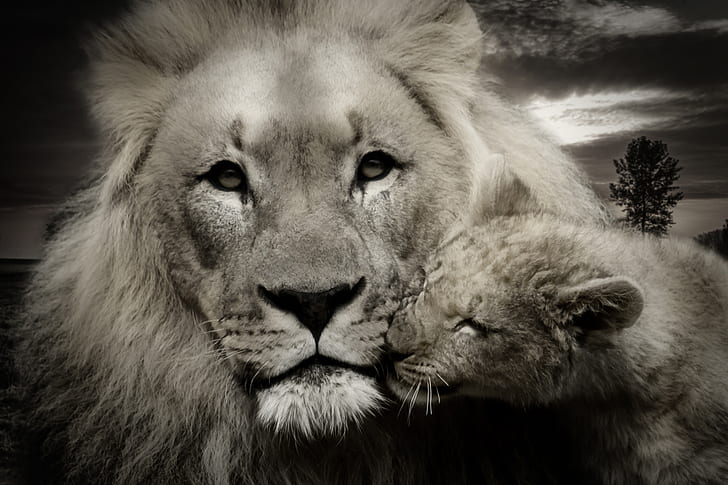 grayscale photo of lion and cub
