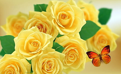 closeup photography of yellow roses and red butterfly