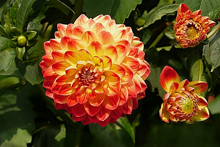 red and orange petaled flowers at daytime