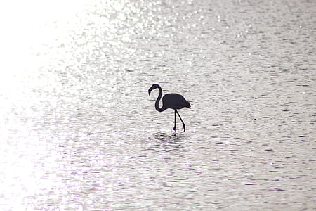 silhouette of flamingo on body of water