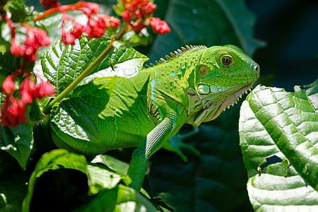 green iguana on flower