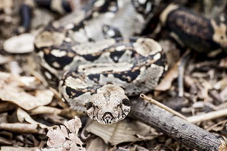 Shallow Focus Photography of Python