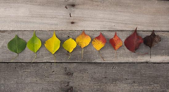 leaf cycle