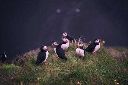 five peguins