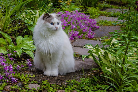white cat beside purple petaled flowers
