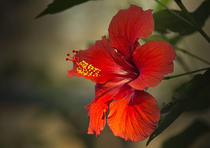 macro photography of red flowers