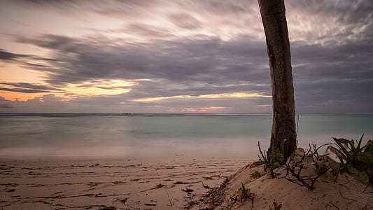 Tree on Sand Near Body of Water
