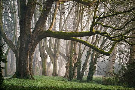 brown tree near green grass