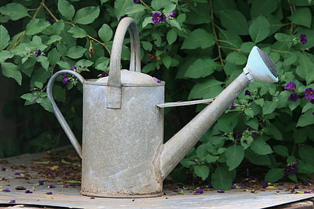 gray metal watering can near green leaf plant