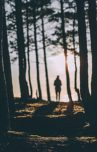 photography of person on forest