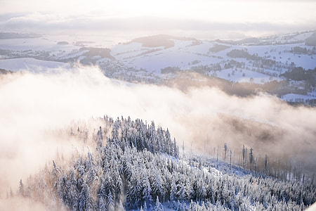 Fog In Snowy Forest Winter Scenery