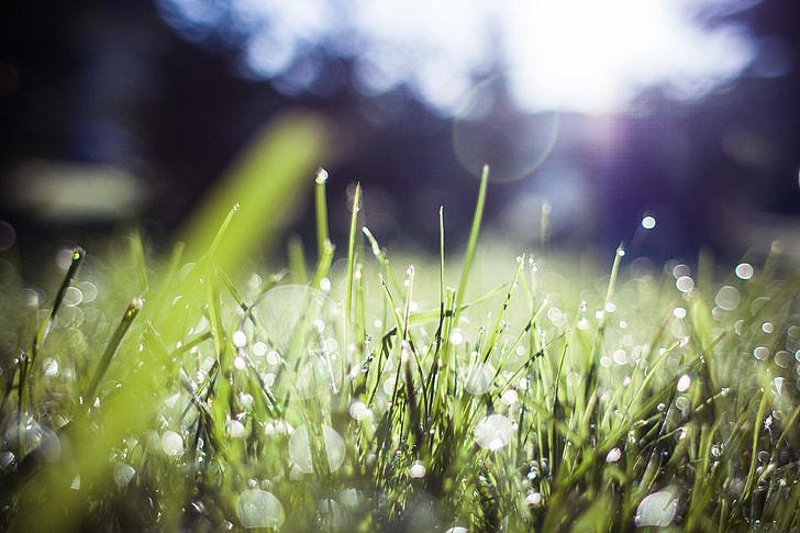 Grass Blue Feelings