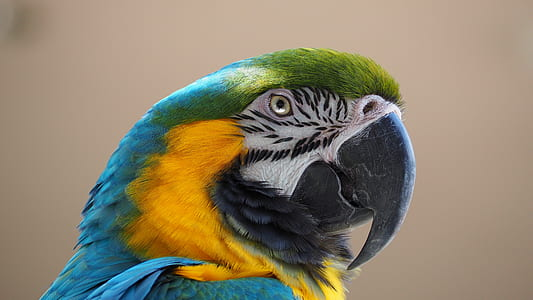 green, blue, and yellow bird