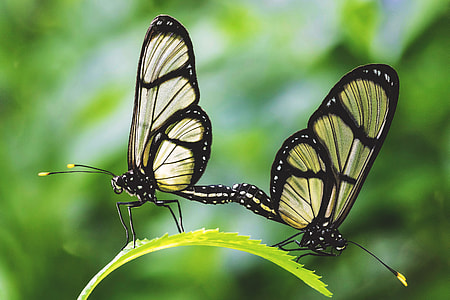 Closeup shot of two butterflies insects