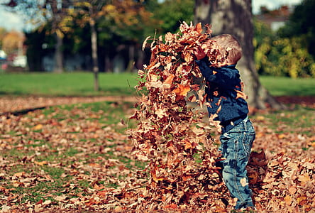 toddler boy playing dried leaf near tree trunk