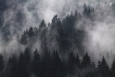 grayscale photography of forest covered by fogs