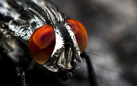 closeup photo of black horsefly