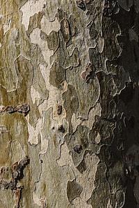 Tree trunks close-ups