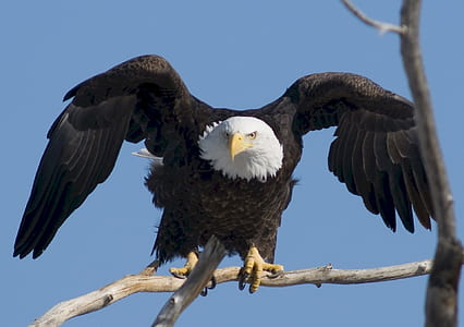 bald eagle on brown tree trunk