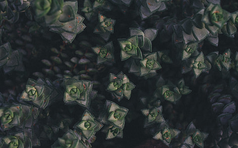 green-and-grey succulent plants