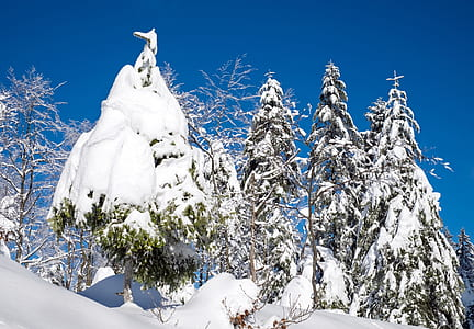 snow covered trees under blue sky
