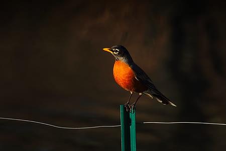 selective focus of brown beaked orange and black bird