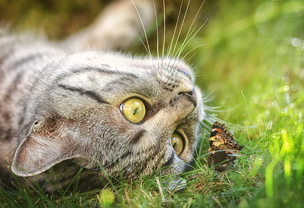 selective focus photography of gray tabby cat beside monarch butterfly