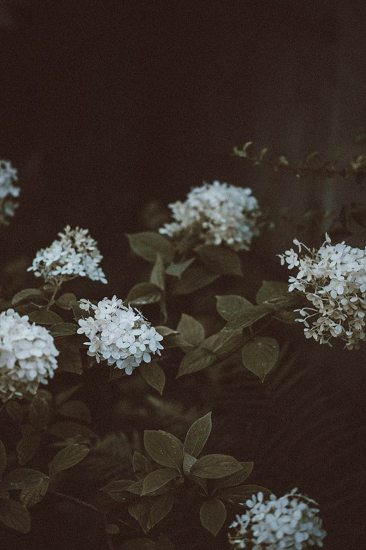 Royalty Free Photo Photography Of White Flowers With Green Leaves