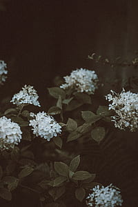 photography of white flowers with green leaves