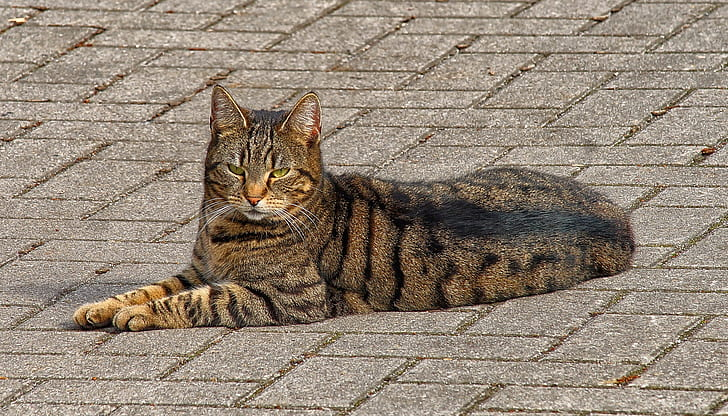 animal photography of brown cat