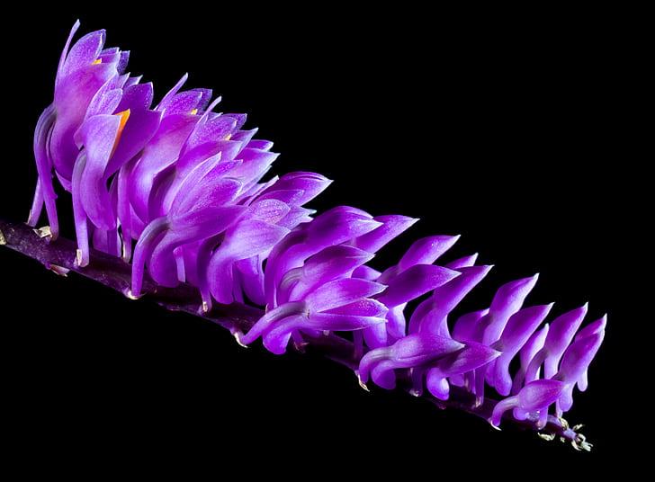 bloomed purple mushrooms