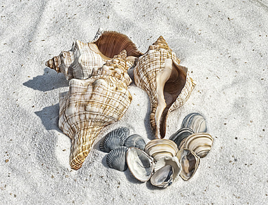 assorted-color seashell on gray sand