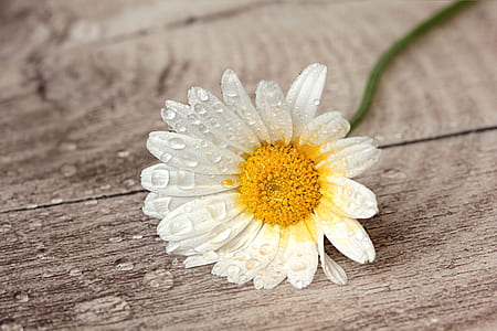 white and yellow flower on gray wooden top