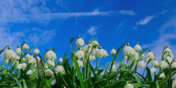 photo of white petaled flowers during daytime