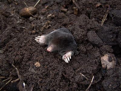 black mole on black soil photo