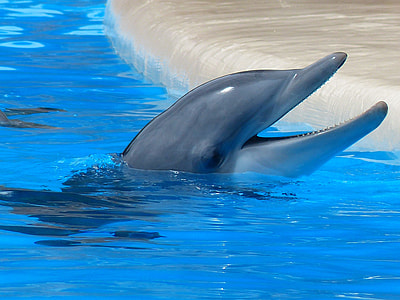 gray dolphin playing on body of water