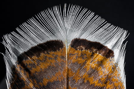 brown, gray, and white close-up photo of feather