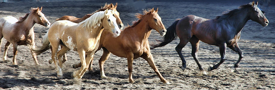 herd of horse