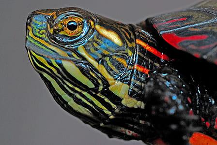 multicolored turtle art
