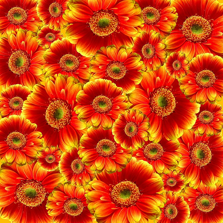 Red and Yellow Petaled Flower