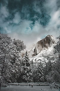snow cover trees near mountain