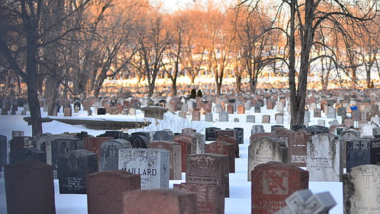 person standing on graveyard