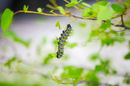 yellow and green caterpillar perching on green leaf plant during daytime