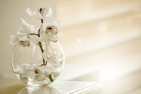 clear glass vase with white flowers