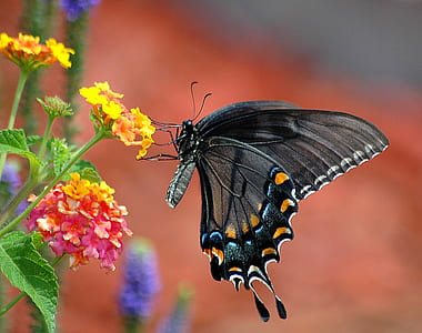 focus photography of black butterfly on top of yellow petaled flower