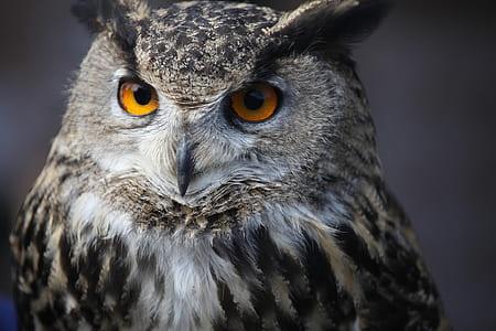 white and gray owl closeup photo