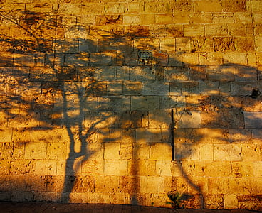 shadows of trees on red brick wall