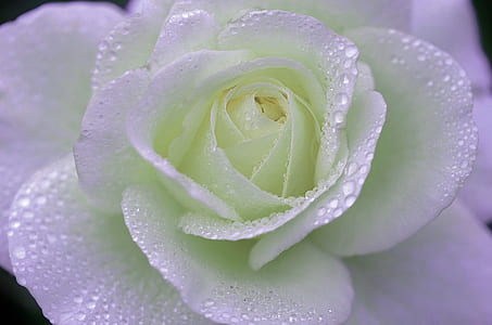 closeup photography of white with dewdrops