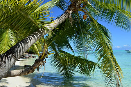 green palm tree near seashore